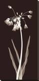 Nectar Twist Pingotettu canvasvedos tekijänä Jim Wehtje