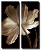 Champagne Tulip II Prints by Charles Britt