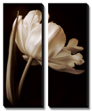 Champagne Tulip I Posters by Charles Britt