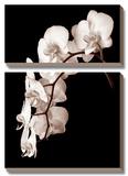 Orchid Dance II Print by John Rehner