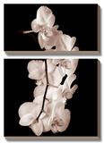 Orchid Dance I Kunst af John Rehner