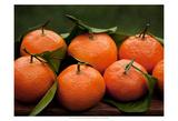 Satsuma Tangerines I Pósters por Rachel Perry