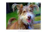 Terrier Hairspray Posters por Robert Mcclintock