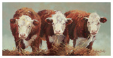 Three of a Kind Giclee Print by Carolyne Hawley
