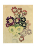 Polyanthus, Walberswick, 1915 Giclee Print by Charles Rennie Mackintosh