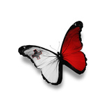 Maltese Flag Butterfly, Isolated On White Arte di  suns_luck