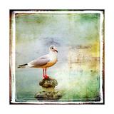 Sea Gull-Artistic Retro Styled Picture Pôsters por  Maugli-l