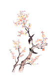 Traditional Chinese Painting Of Plum Blossom Prints by  aslysun