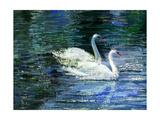 Two White Swans On Lake Affiches par  balaikin2009