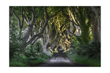 The Dark Hedges, N. Ireland Kunstdruck von Jacek Kadaj