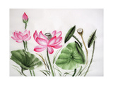 Watercolor Painting Of Pink Lotus Posters by  Surovtseva