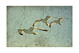 Vintage Photo Of Flying Seagulls Affiches par  melis