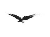 An Image Of A Grunge Black Bird Affiches par  magann