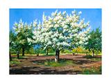 Blossoming, Spring Garden Art par  balaikin2009