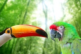 Toco Toucan And Military Macaw Green Parrot Reproduction photographique par  holbox