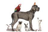 Group Of Pets - Dog, Cat, Bird, Reptile, Rabbit, Isolated On White Lámina fotográfica por  Life on White