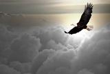 Bald Eagle Flying Above The Clouds Fotoprint av Steve Collender