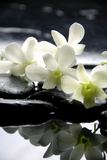 Zen Stones And Branch White Orchids With Reflection Reproduction photographique par  crystalfoto