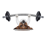Personal Trainer Dog Reproduction photographique Premium par Javier Brosch