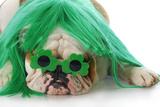 St Patricks Day Dog Valokuvavedos tekijänä Willee Cole