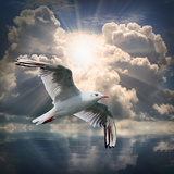 The Seagull Flying Over A Sea Against A Dramatic Sky. Background From Nature Reproduction photographique par  Kletr