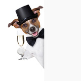 Dog Toasting Photographic Print by Javier Brosch