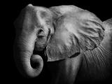Elephant Fotoprint van  Donvanstaden