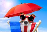 Dog Sunbathing Fotografisk tryk af Javier Brosch