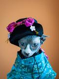 Geisha Cat Photographic Print by  zinchik