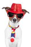 Crazy Silly Funny Dog Hat Glasses Tie Valokuvavedos tekijänä Javier Brosch