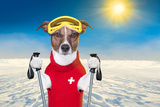Skiing Dog Reproduction photographique par Javier Brosch