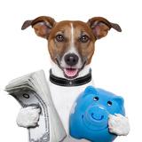 Money Dog Reproduction photographique par Javier Brosch