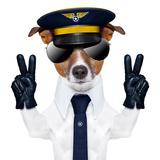 Pilot Dog Valokuvavedos tekijänä Javier Brosch