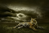 Tiger Looking And Sitting Under Dramatic Sky With Clouds Lámina fotográfica por  yuran-78