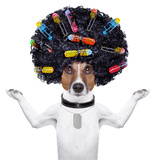 Hairdresser Dog With Curlers Photographic Print by Javier Brosch