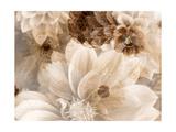 Beauty Spot Prints by Alaya Gadeh