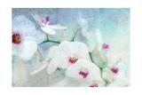 Orchid Pleasure Kunstdrucke von Alaya Gadeh