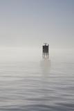 Buoy with Sea Lions, Long Beach Harbor, California, USA Lámina fotográfica por Peter Bennett