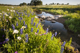 Wildflowers by Hill Country Stream, Texas, USA Reproduction photographique par Larry Ditto