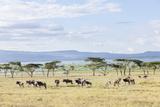Lake Naivasha and Crescent Island Game Park, Naivasha, Kenya Impressão fotográfica por Martin Zwick
