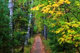 Wooden Walking Trail in Acadia National Park, Maine, USA Reproduction photographique Premium par Joanne Wells