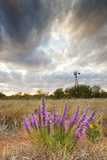 Dense Blazing Star (Liatris) and Windmill on Texas Prairie, Texas, USA Reproduction photographique par Larry Ditto