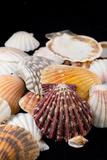 Detail of Seashells from around the World Fotografisk tryk af Cindy Miller Hopkins