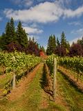Winery and Vineyard on Whidbey Island, Washington, USA Fotoprint van Richard Duval