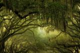 Oak Trees with Spanish Moss, Savannah, Georgia, USA Reproduction photographique par Joanne Wells