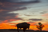 Bison Bull Silhouette, Theodore Roosevelt NP, North Dakota, USA Photographic Print by Chuck Haney