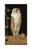 The White Owl: 'Alone and Warming His Five Wits, the White Owl in the Belfry Sits', 1856 Giclée-tryk af William J. Webbe