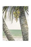 Seaside Coconuts Láminas por Arnie Fisk