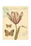 Tulip Curiosity Poster von Chad Barrett