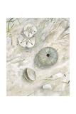 Seaside Urchin Kunstdrucke von Arnie Fisk